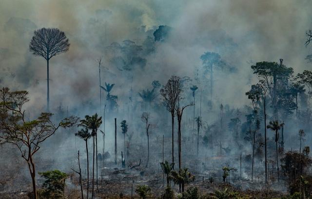 Les feux de la forêt Amazonienne auront bien un impact sur le climat